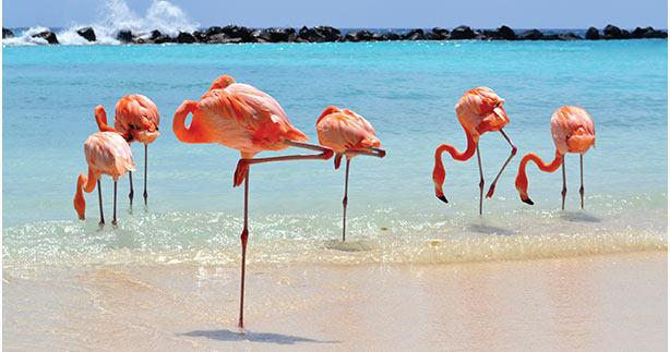 Renaissance Aruba Resort & Casina