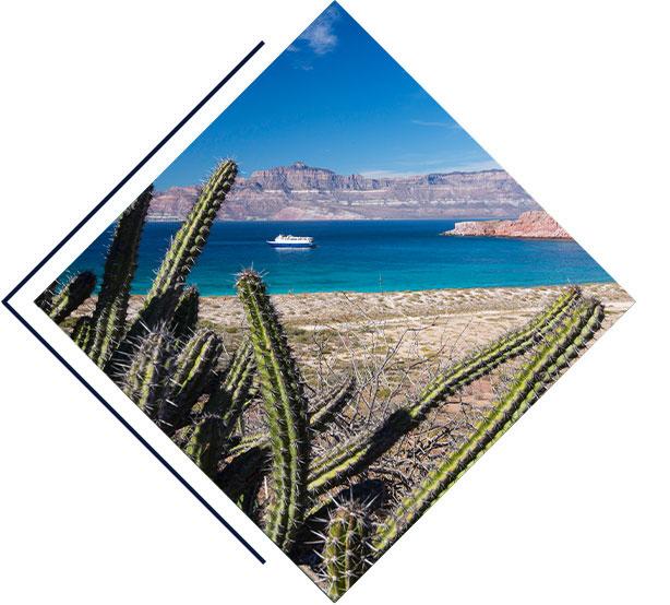 Baja�s Bounty Cruise