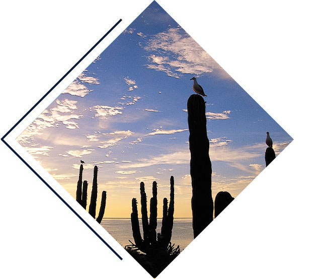 Baja California & the Sea of Cortez: Among the Great Whales Cruise