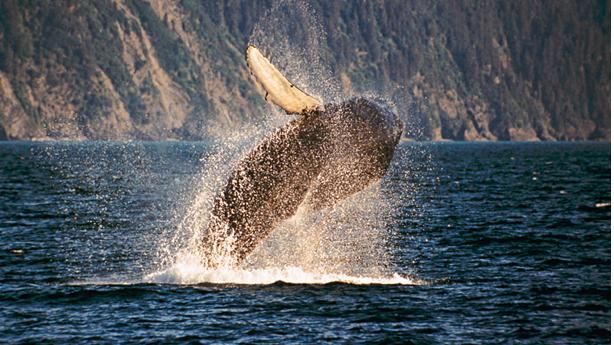 Cruise Alaska with Celebrity Cruises