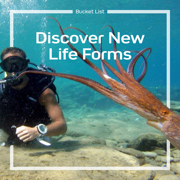 Discover new life forms!