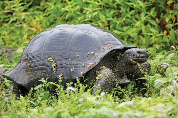 Discover the magnificent creatures living on the Galapagos!