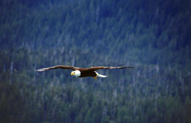 Alaska Voyages