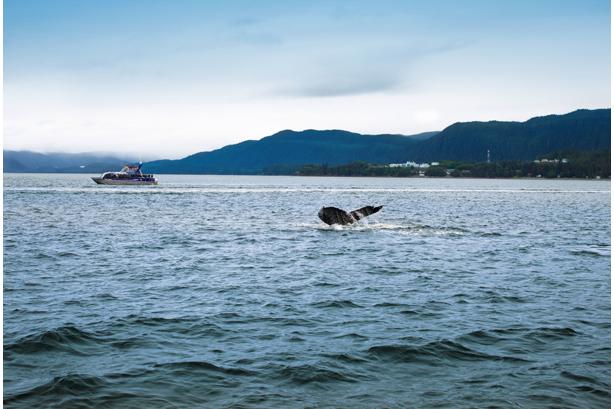 7-Nt Alaska Cruises from $574