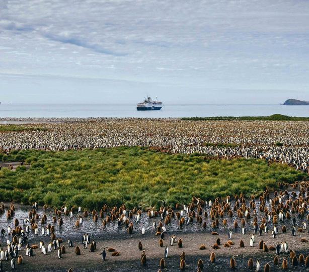 Explore the Falkland Islands, South Georgia, and Antarctica