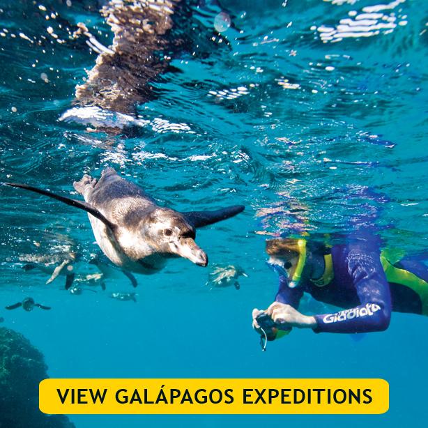 Galapagos Expeditions