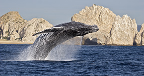 <strong>Destination of the Month: Los Cabos</strong>