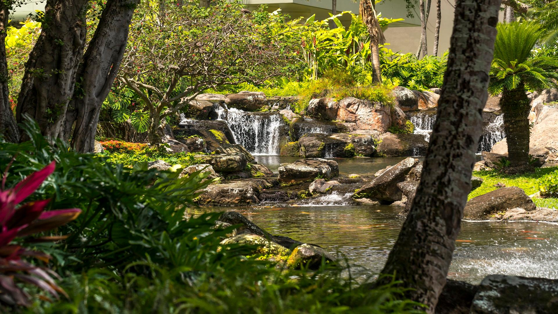 Gaze at the koi fish swimming in our resort's serene garden ponds, surrounded by a lush vegetation fed by a waterfall.