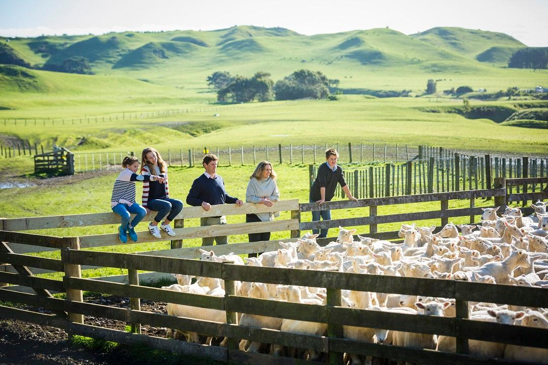 Cape Kidnappers Shepherding Experience