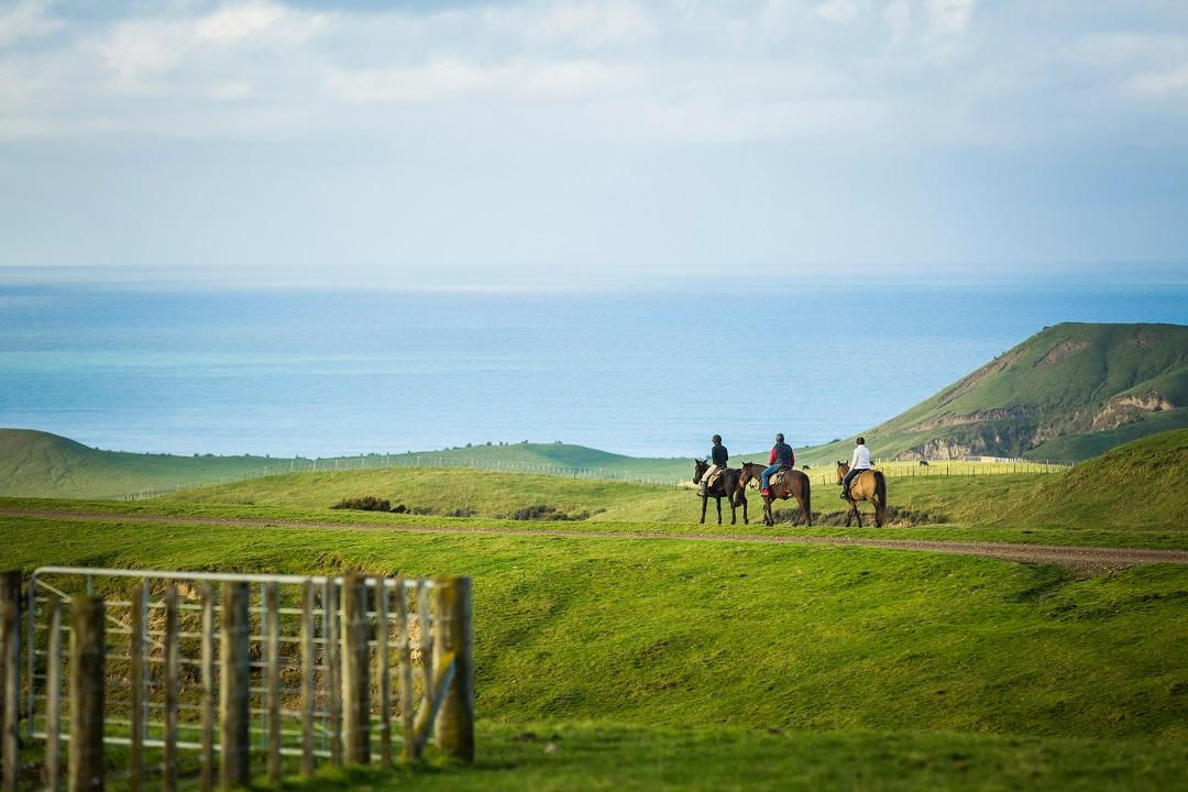 Horse Riding at Cape Kidnappers