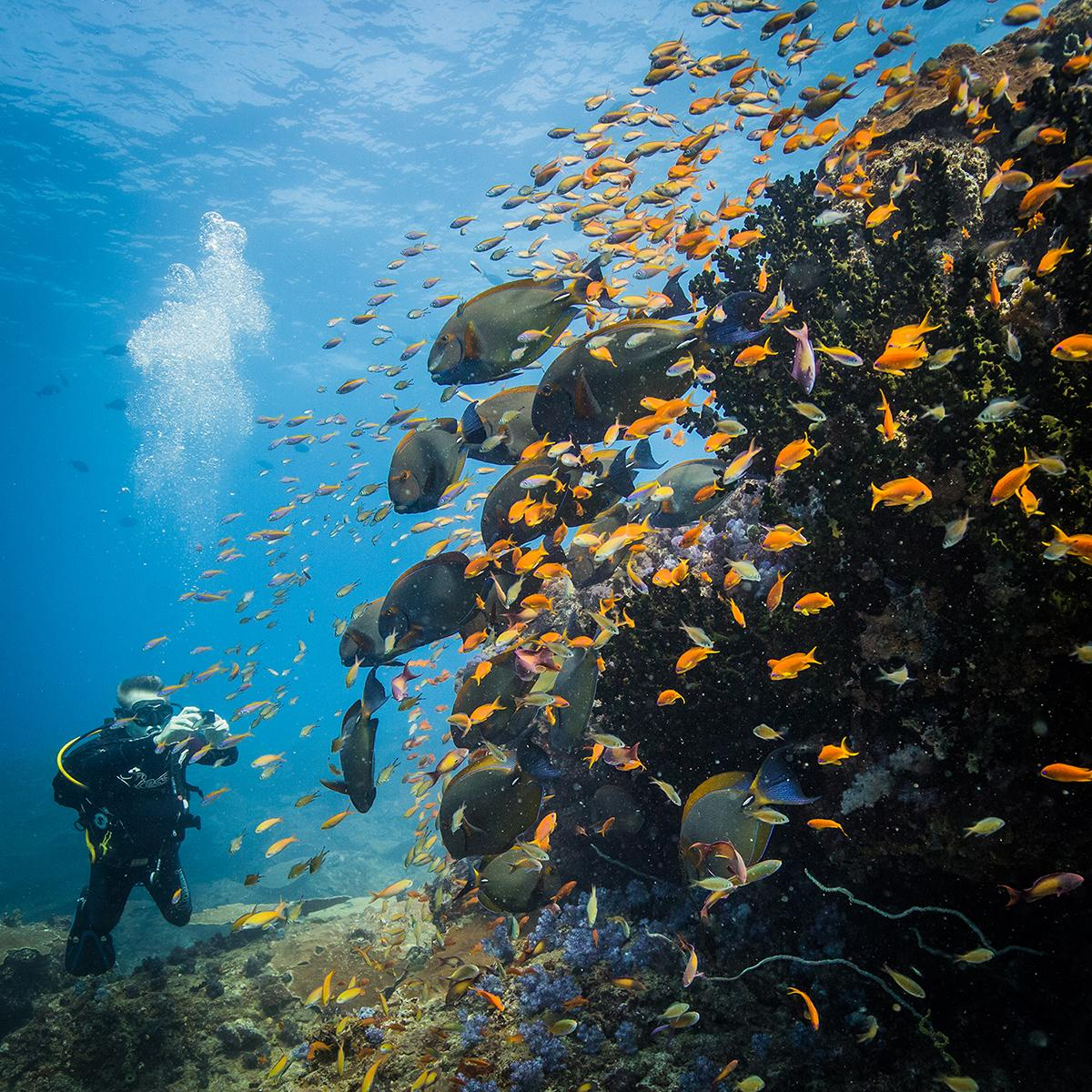 Diving at Two Mile Reef